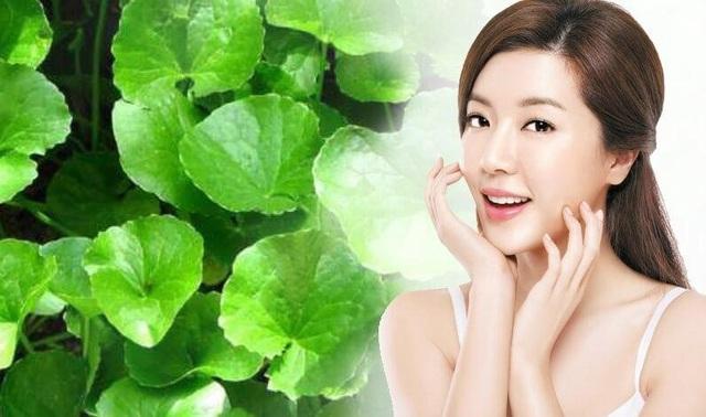 Học cách trị mụn, làm đẹp da bằng rau má từ bác sỹ Đông y - Ảnh 3.