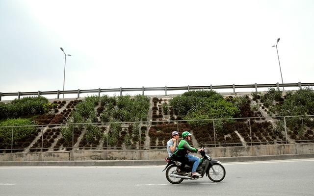 Hàng lang dẫn lên cầu Thanh Trì biến thành thảm hoa vô cùng đẹp mắt - Ảnh 8.