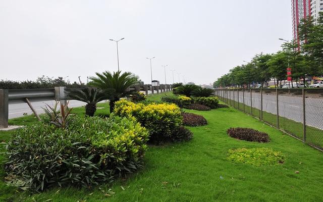 Hàng lang dẫn lên cầu Thanh Trì biến thành thảm hoa vô cùng đẹp mắt - Ảnh 3.
