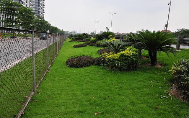 Hàng lang dẫn lên cầu Thanh Trì biến thành thảm hoa vô cùng đẹp mắt - Ảnh 10.