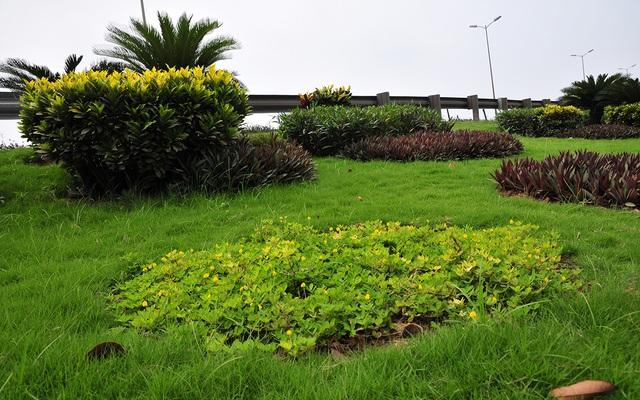 Hàng lang dẫn lên cầu Thanh Trì biến thành thảm hoa vô cùng đẹp mắt - Ảnh 2.