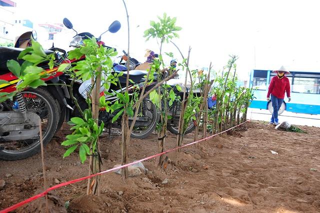 Hơn 1 năm hoang phế, dải phân cách trục vành đai 3 Hà Nội đã được phủ cây xanh - Ảnh 7.