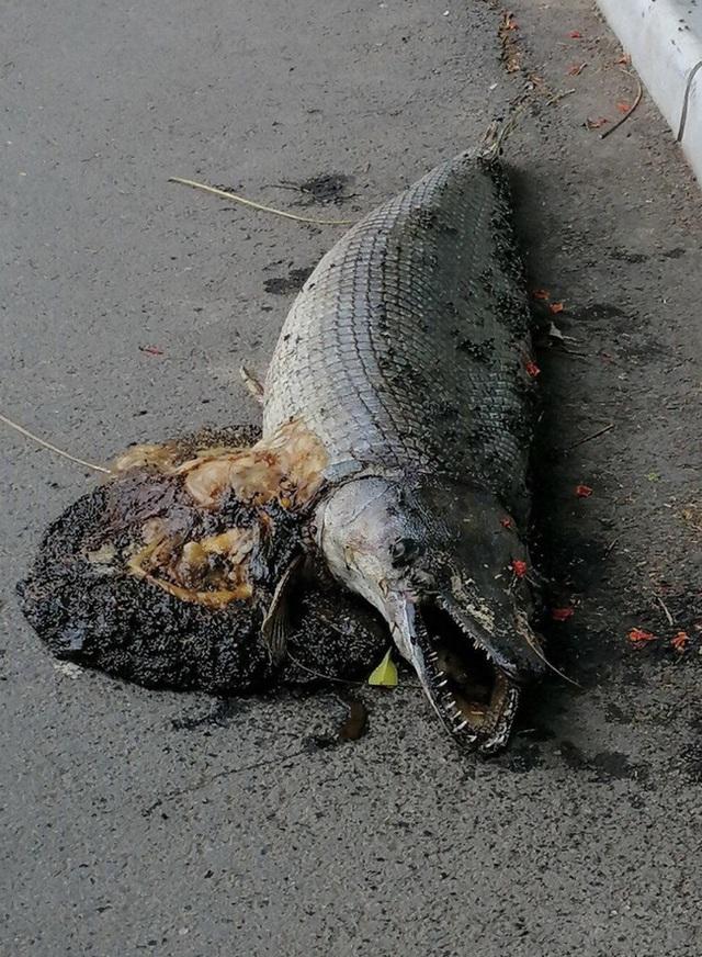 Hà Nội: Phát hiện xác sinh vật giống cá sấu hoả tiễn trong công viên Thống Nhất - Ảnh 1.