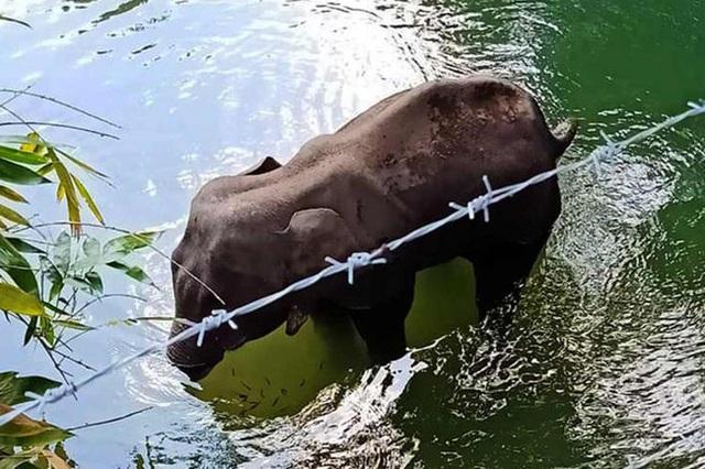 Đã bắt giữ được nghi phạm trong vụ voi mẹ mang thai chết tức tưởi vì ăn phải dứa nhồi pháo nổ - Ảnh 2.