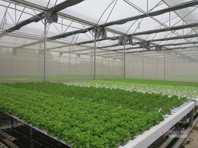 Bỏ ngân hàng về trồng rau, làm vì đam mê thu đều 600 triệu/tháng - Ảnh 1.