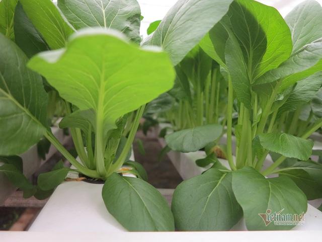 Bỏ ngân hàng về trồng rau, làm vì đam mê thu đều 600 triệu/tháng - Ảnh 3.