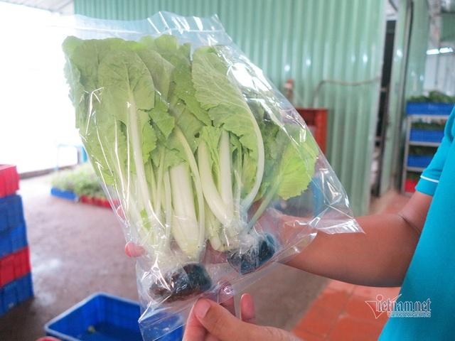 Bỏ ngân hàng về trồng rau, làm vì đam mê thu đều 600 triệu/tháng - Ảnh 10.