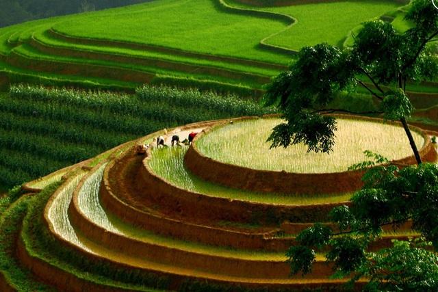 Ngắm ruộng bậc thang Mù Cang Chải đẹp lung linh mùa đổ nước - Ảnh 3.