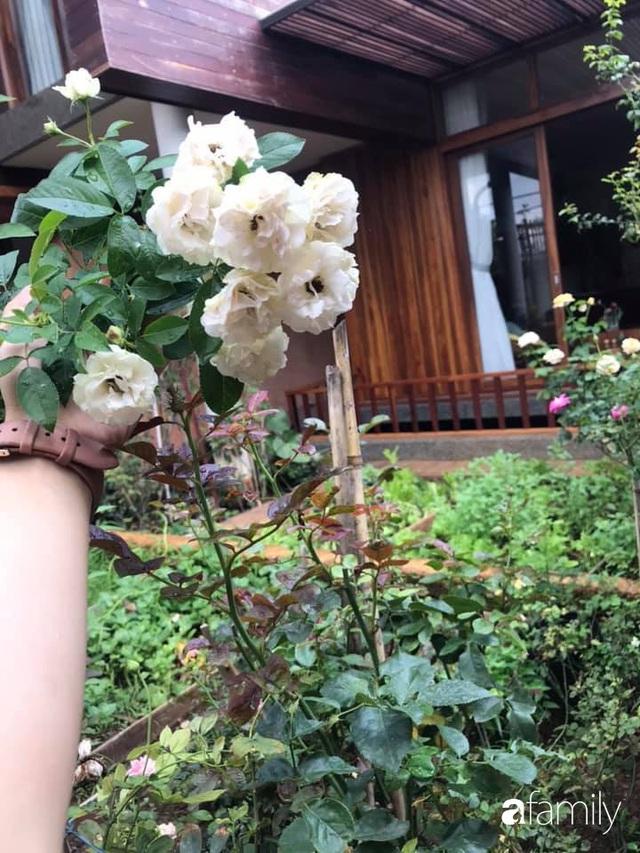 Mảnh vườn 50m² tốt tươi quanh năm nhờ bí quyết trộn đất không giống ai của bà mẹ ở Sài Gòn - Ảnh 16.