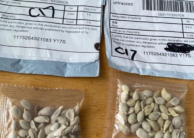50 bang của Mỹ đồng loạt cảnh báo hạt giống bí ẩn từ Trung Quốc - Ảnh 1.