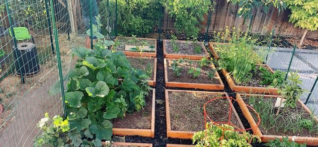Cuộc sống bình yên, hòa mình cùng thiên nhiên khi trồng rau nuôi gà trong mảnh vườn 650m² của mẹ Việt ở Mỹ - Ảnh 2.