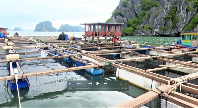 Bão số 2: Hải Phòng, Quảng Ninh sơ tán dân, cấm biển từ 0h ngày 2/8 - Ảnh 5.