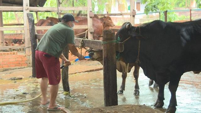 Bắt quả tang bơm nước vào bò trước khi mổ bán, chuyên gia cảnh báo mặc dù rất nguy hiểm đến sức khỏe nhưng bằng mắt thường rất khó phát hiện! - Ảnh 2.