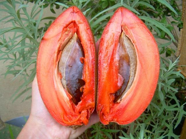Những loại quả ruột đỏ gây sốt nhất hiện nay - Ảnh 4.