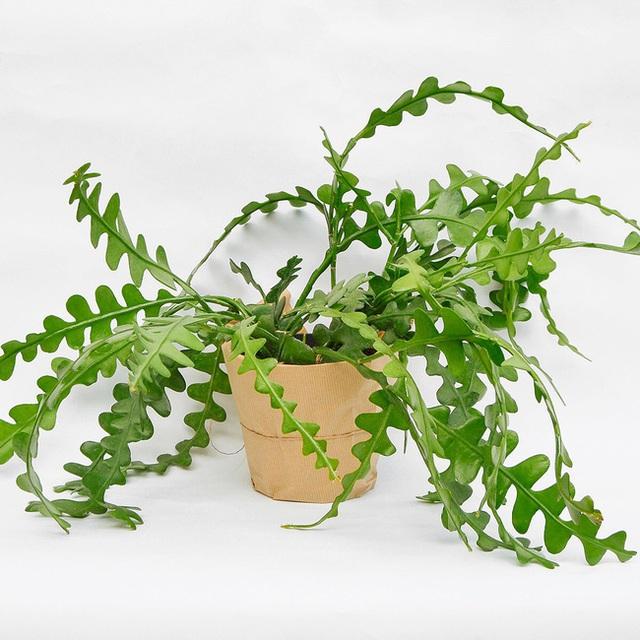 8 loại cây cảnh để bàn làm việc cực dễ chăm sóc mà lại đẹp lung linh - Ảnh 5.