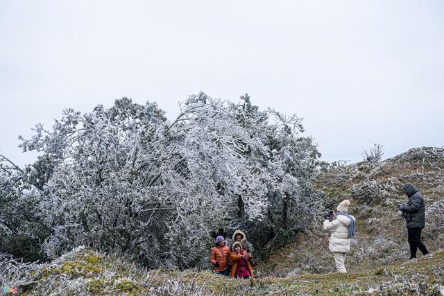 لحظه یخ زدگی درختان در روزهای سرد 0 درجه سانتیگراد - عکس 1.