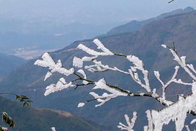 لحظه یخ زدگی درختان در روزهای سرد 0 درجه سانتیگراد - عکس 2.