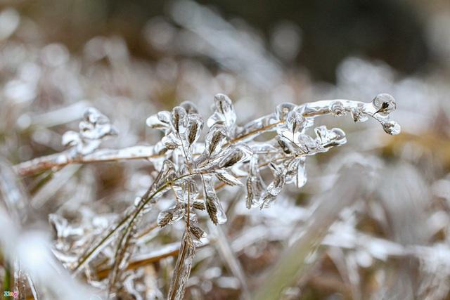 لحظه یخ زدگی درختان در یک روز سرد 0 درجه سانتیگراد - عکس 7.
