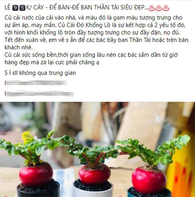 تربچه غول پیکر قرمز به طور غیر منتظره ای قیمت های خود را در بازار آنلاین دو برابر کرد زیرا به زنان دستور داده شد که شب سال نو خانه های خود را تزئین کنند - عکس 3.