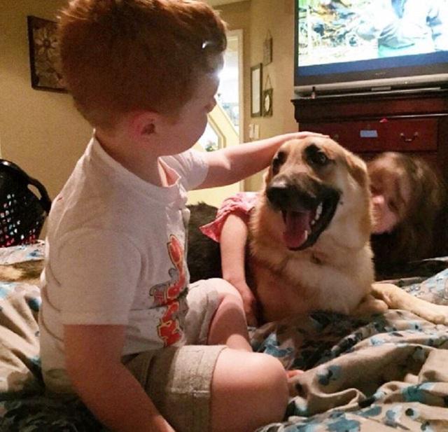 سگ خانگی در حیاط بازی می کرد و به طرف آن هجوم آورد ، گویی که به یک صاحب 7 ساله حمله کرد ، مادربزرگ دوید تا کل بدن حیوان را پر از خون پیدا کند - عکس 3.