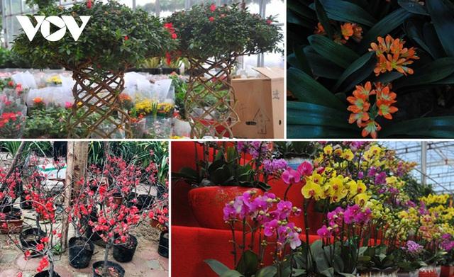 گیاهان زینتی نفیس امسال بر بازار Tet تسلط دارند - عکس 1.