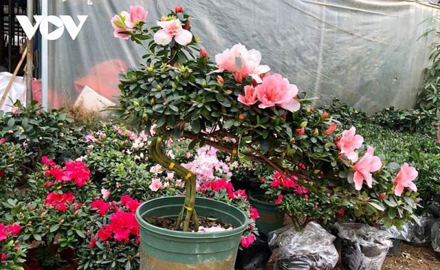 گیاهان زینتی نفیس امسال بر بازار Tet تسلط دارند - عکس 3.
