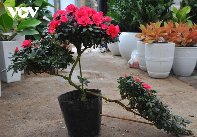 گیاهان زینتی نفیس امسال بر بازار Tet تسلط دارند - عکس 4.