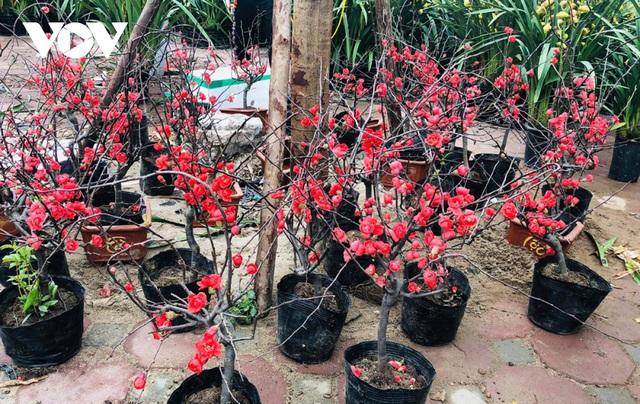 گیاهان زینتی نفیس امسال بر بازار Tet تسلط دارند - عکس 5.