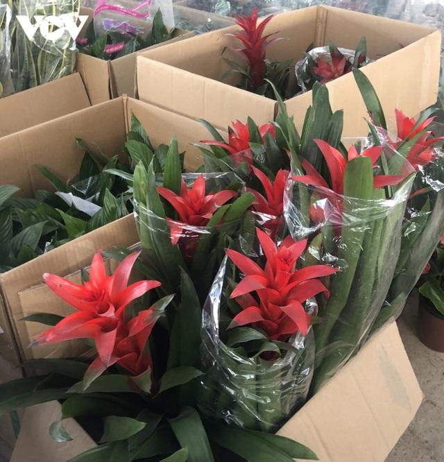 گیاهان زینتی نفیس امسال بر بازار Tet تسلط دارند - عکس 7.