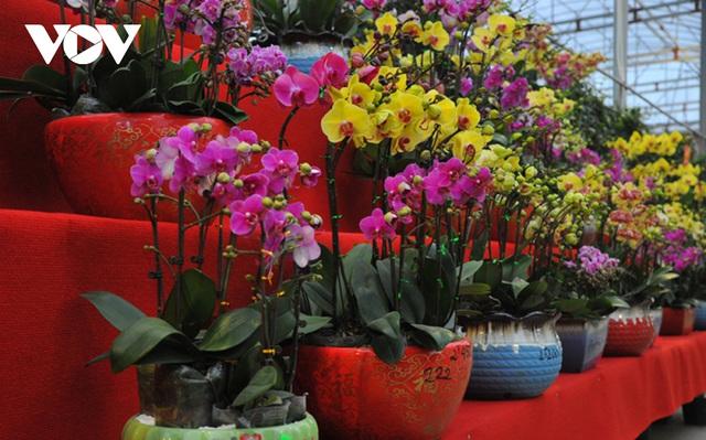 گیاهان زینتی نفیس امسال بر بازار Tet تسلط دارند - عکس 9.
