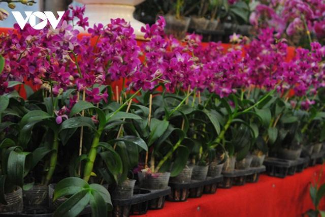 گیاهان زینتی نفیس امسال بر بازار Tet تسلط دارند - عکس 10.