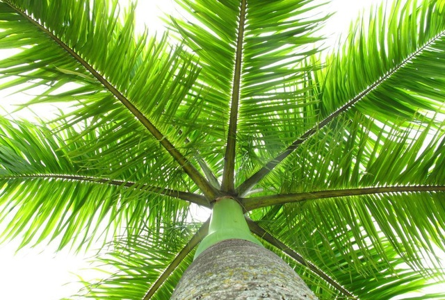 6 loại cây nên trồng trước cửa nhà để hút tiền bạc vào nhà không ngừng - Ảnh 1.