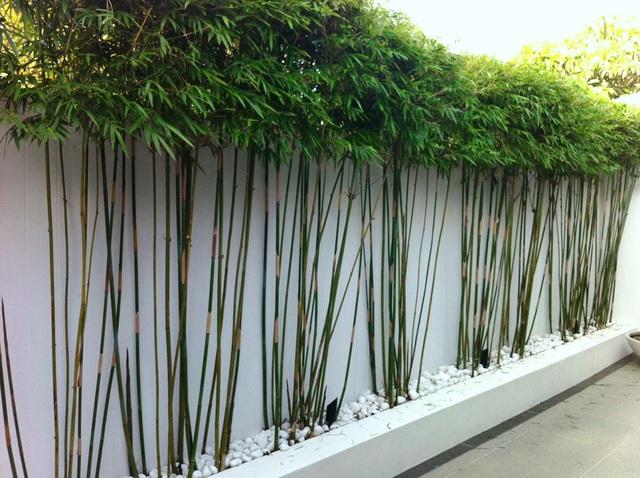 6 loại cây nên trồng trước cửa nhà để hút tiền bạc vào nhà không ngừng - Ảnh 3.