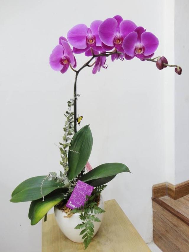 Cùng nghe chị bán hoa lan 10 năm hướng dẫn cách chọn hoa đẹp chuẩn chỉnh cho ngày Tết - Ảnh 1.