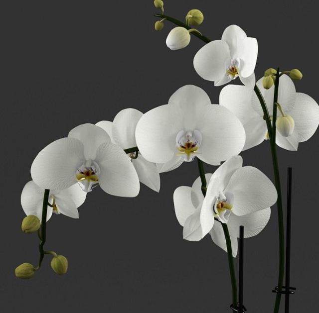 Cùng nghe chị bán hoa lan 10 năm hướng dẫn cách chọn hoa đẹp chuẩn chỉnh cho ngày Tết - Ảnh 2.