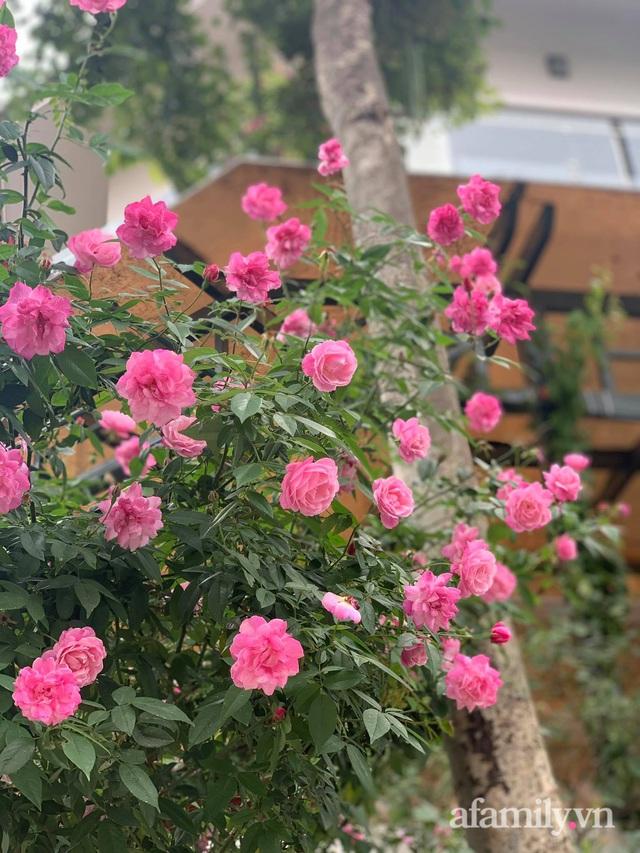 Ngôi nhà quanh năm rực rỡ sắc hương hoa hồng và đủ loại cây ăn quả ở Hà Nội - Ảnh 17.