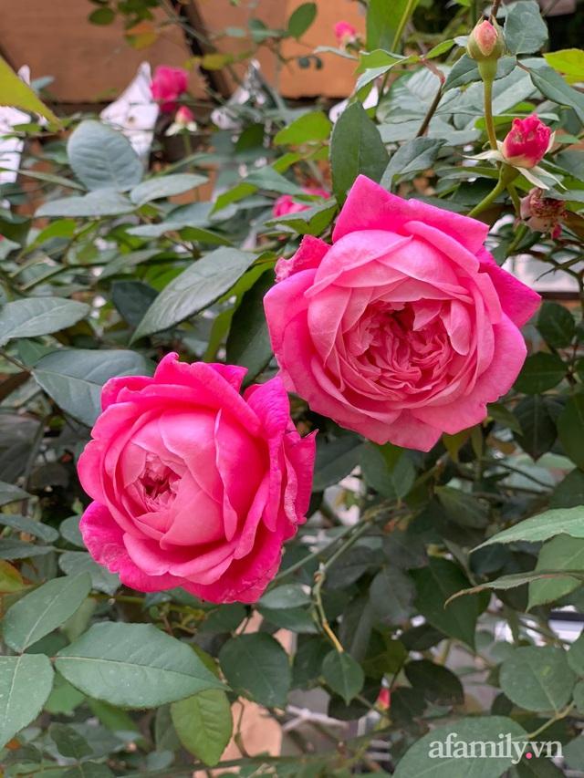 Ngôi nhà quanh năm rực rỡ sắc hương hoa hồng và đủ loại cây ăn quả ở Hà Nội - Ảnh 20.