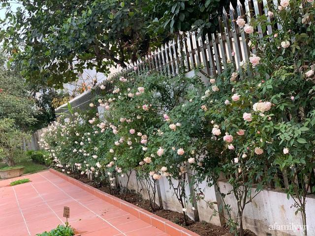 Ngôi nhà quanh năm rực rỡ sắc hương hoa hồng và đủ loại cây ăn quả ở Hà Nội - Ảnh 3.