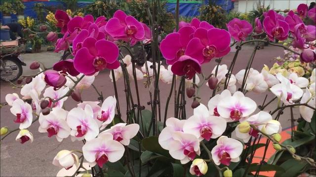 Cùng nghe chị bán hoa lan 10 năm hướng dẫn cách chọn hoa đẹp chuẩn chỉnh cho ngày Tết - Ảnh 3.