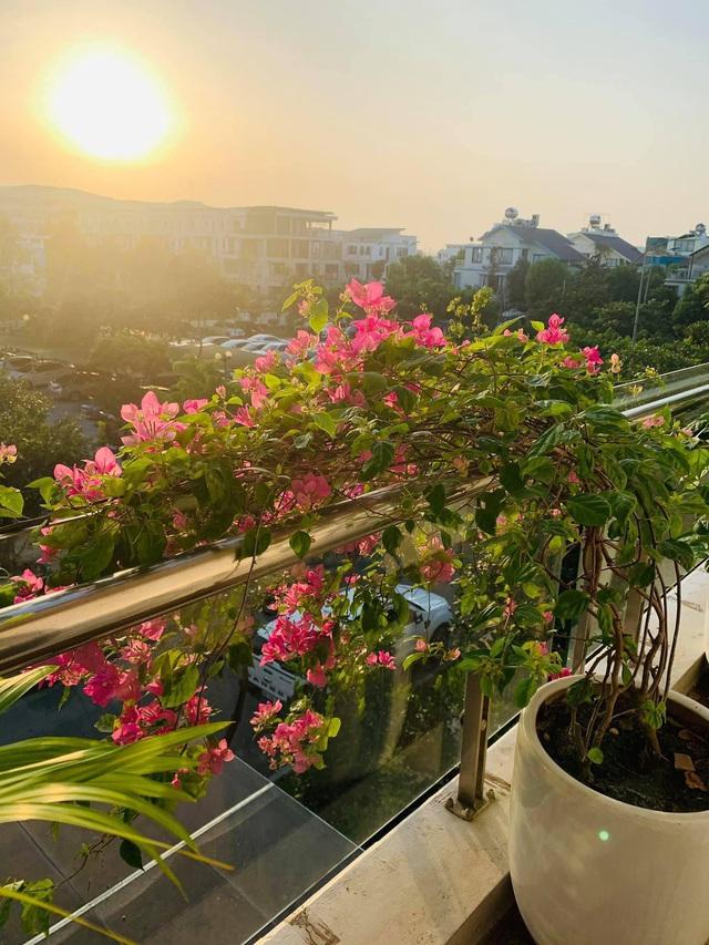 Ngôi nhà quanh năm rực rỡ sắc hương hoa hồng và đủ loại cây ăn quả ở Hà Nội - Ảnh 23.