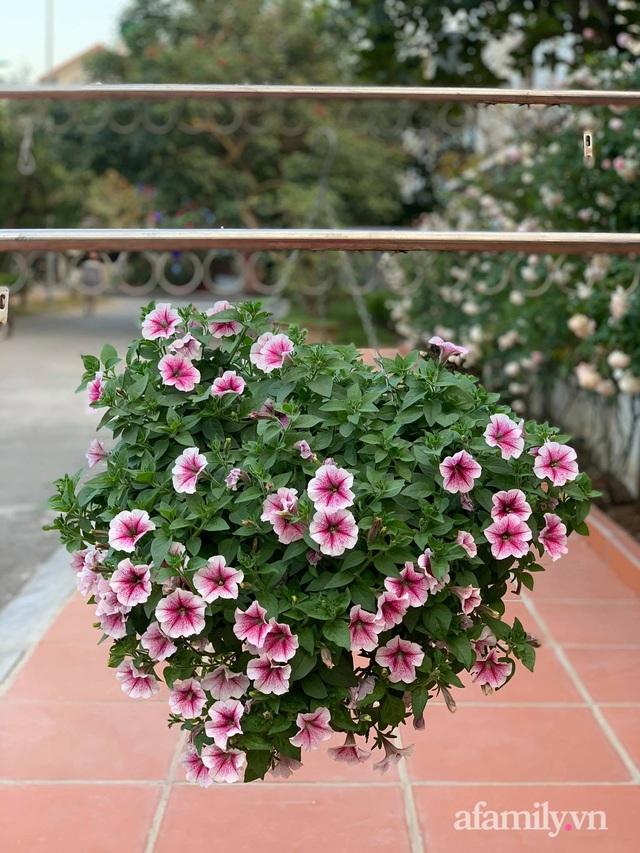 Ngôi nhà quanh năm rực rỡ sắc hương hoa hồng và đủ loại cây ăn quả ở Hà Nội - Ảnh 24.