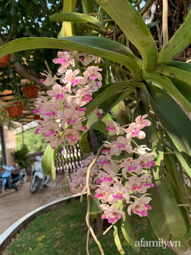 Ngôi nhà quanh năm rực rỡ sắc hương hoa hồng và đủ loại cây ăn quả ở Hà Nội - Ảnh 30.