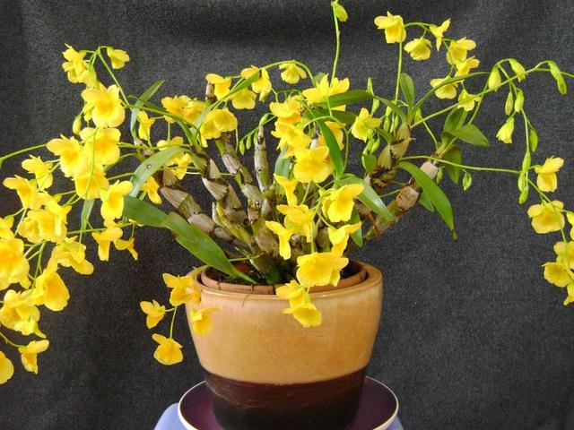 Cùng nghe chị bán hoa lan 10 năm hướng dẫn cách chọn hoa đẹp chuẩn chỉnh cho ngày Tết - Ảnh 6.
