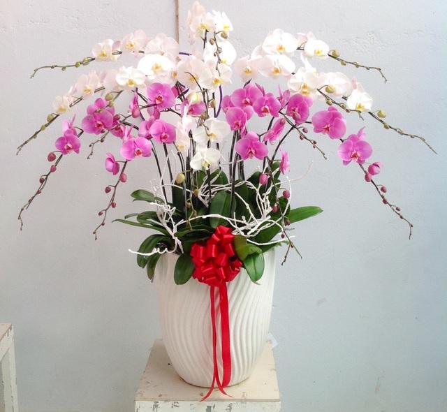 Cùng nghe chị bán hoa lan 10 năm hướng dẫn cách chọn hoa đẹp chuẩn chỉnh cho ngày Tết - Ảnh 8.