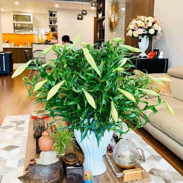 کالاهای داغ این سال نو: گلدان گل از دست بودا زیبا است - عکس 3.