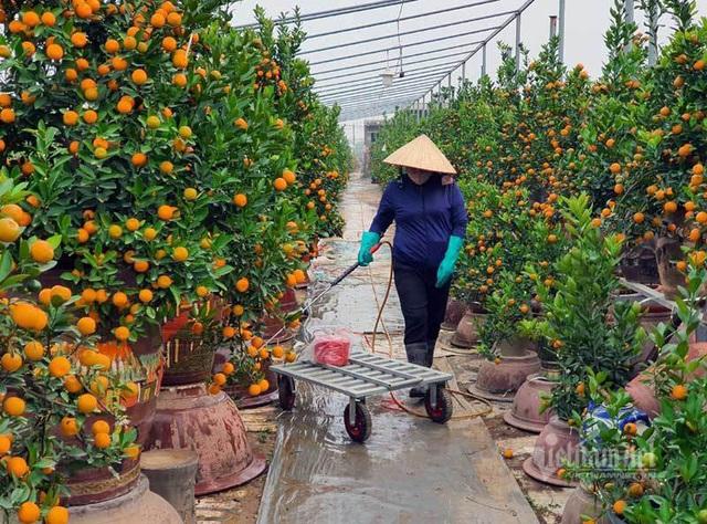 مردم از هاثان تعاونی ها را برای بازی تت ریختند ، باغبان ها میلیاردها پول جمع کردند - عکس 2.