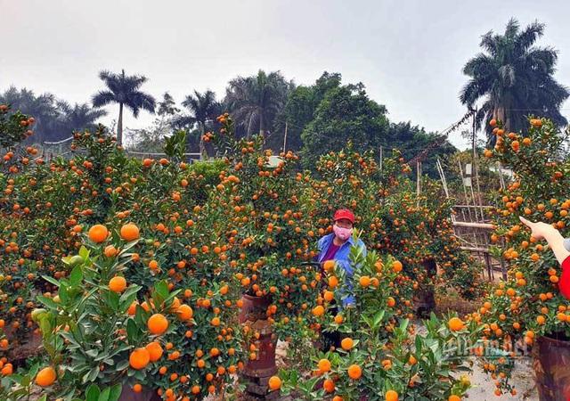 مردم هاثان تعاونی ها را برای بازی تت ریختند ، باغبان ها میلیاردها پول جمع کردند - عکس 11.