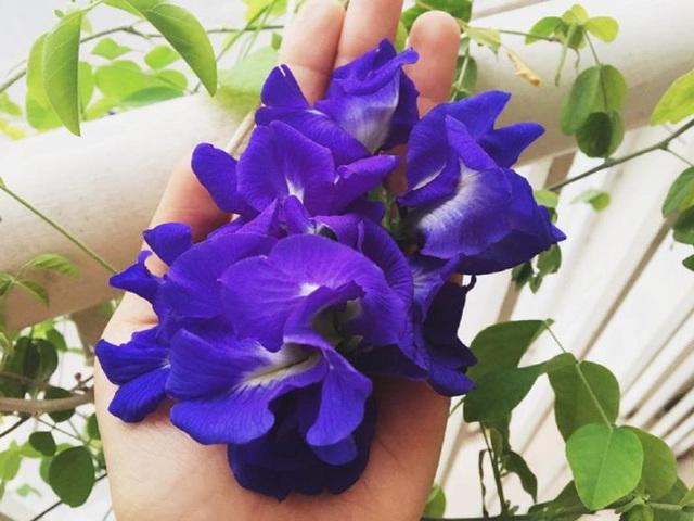 این گل نه تنها به زیبایی درخشان است ، بلکه اثرات معجزه آسای بسیاری بر سلامتی دارد - عکس 4.