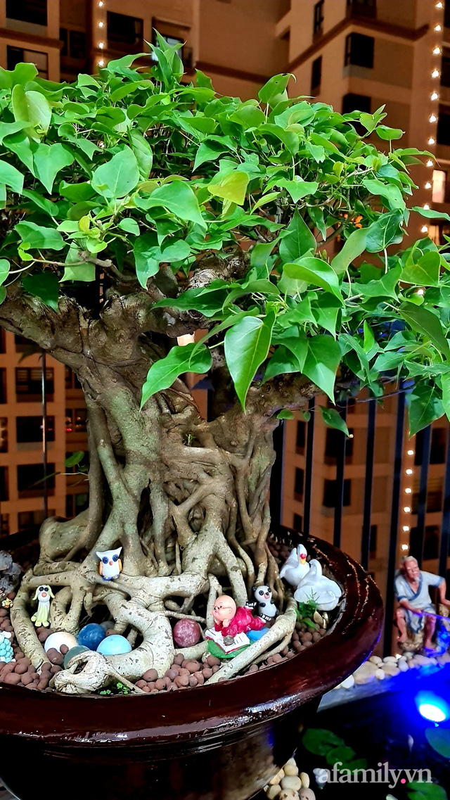 Khu vườn nhỏ thư giãn, tĩnh lặng trên ban công với view hồ lãng mạn của gia đình giám đốc trẻ ở Hà Nội - Ảnh 9.