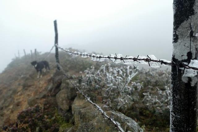 منطقه مرزی Binh Lieu در یخ و برف بسیار زیبا است - عکس 12.